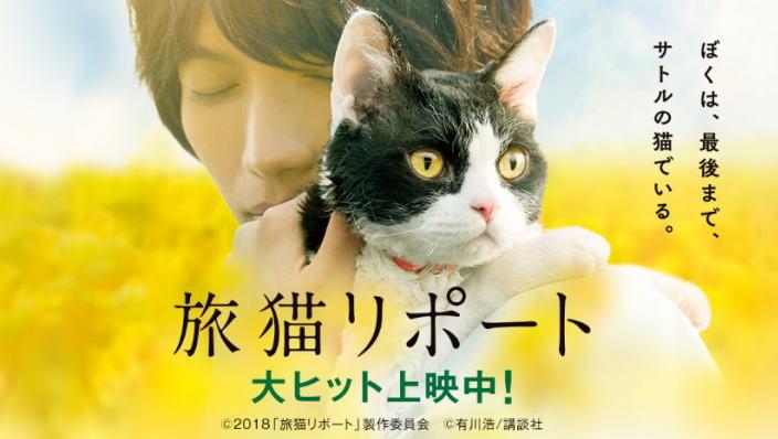 旅猫リポート動画配信